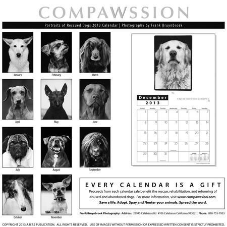 Compawssion: Portraits Of Rescued Dogs 2013 Calendar