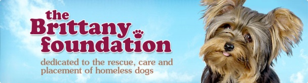 Brittany Foundation - A Day In Their Paws Fundraiser