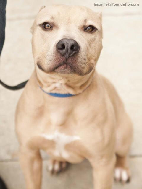 Adoptable Dog Ziegler