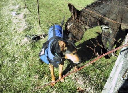 Adopted Dog Apache