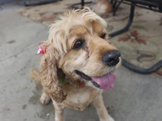 Adoptable Dog Bebe