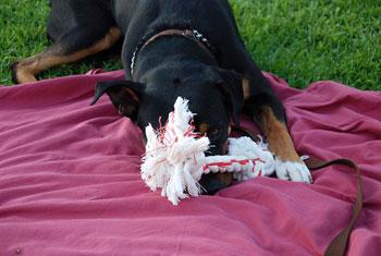 Adopted Dog Buddy
