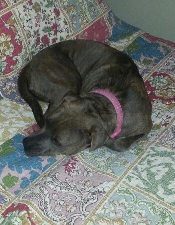 Adopted Dog Clara