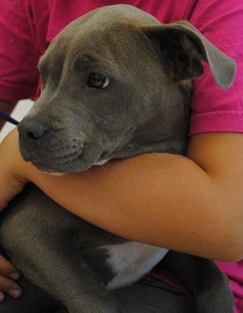 Adopted Dog Skittles