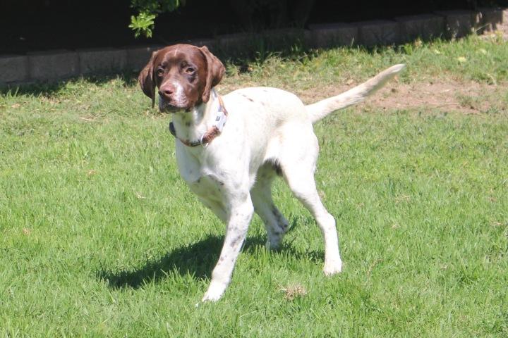 Adoptable Dog Jayce