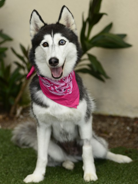 Adoptable Dog Dee Dee