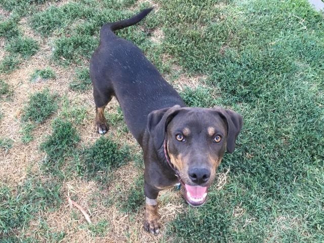 Adoptable Dog Cisco