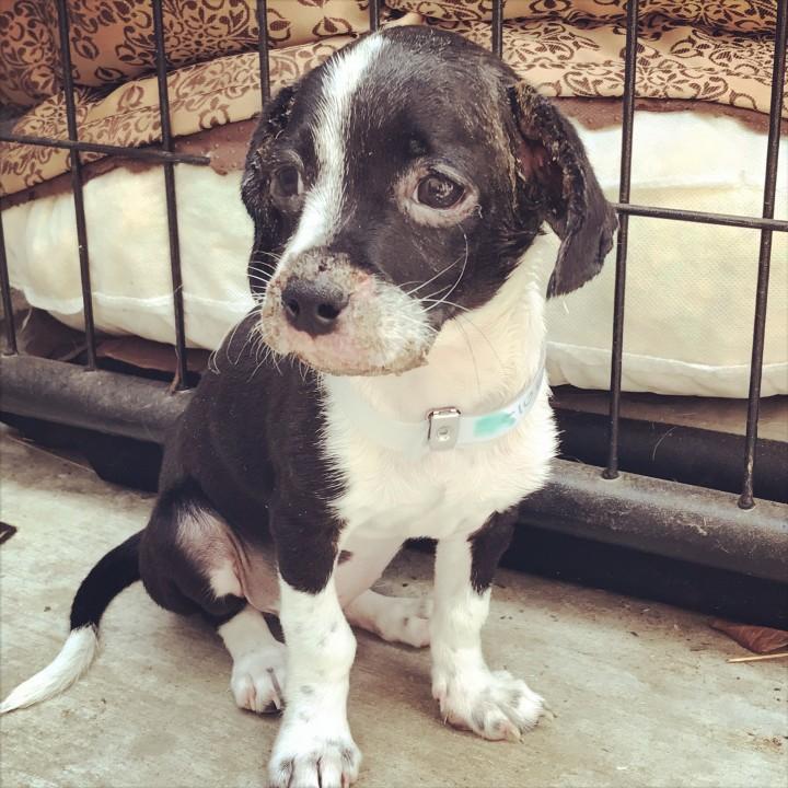 Adoptable Dog Ragoo