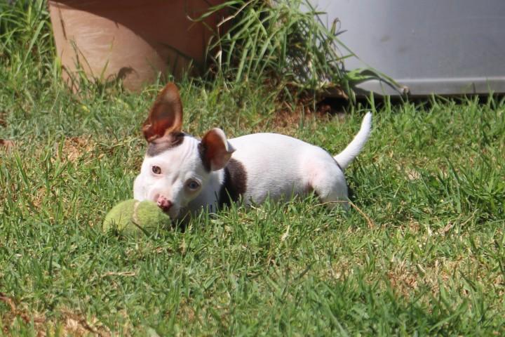 Adoptable Dog Squiggy