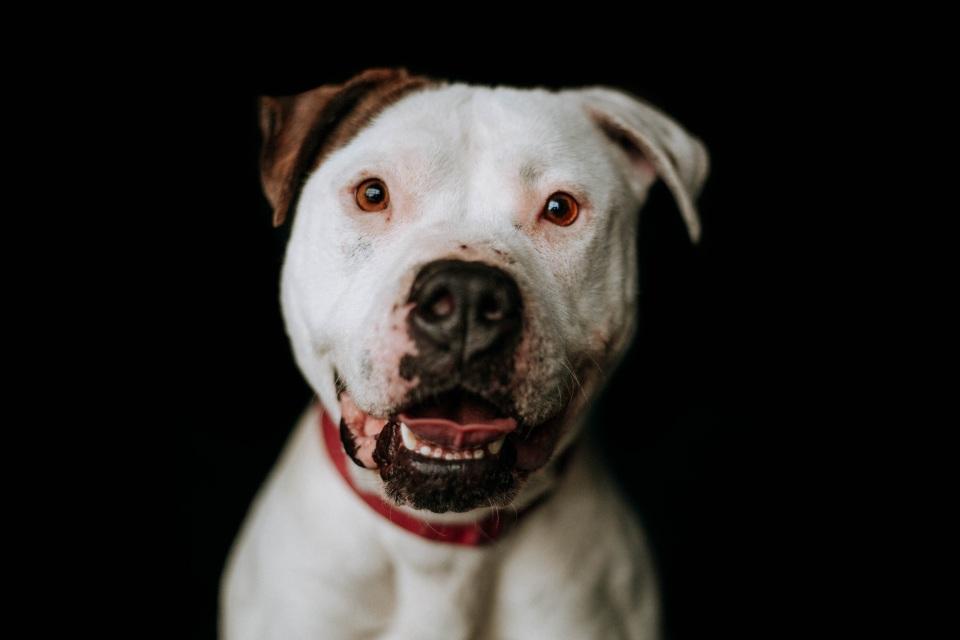 Adoptable Dog Valerie