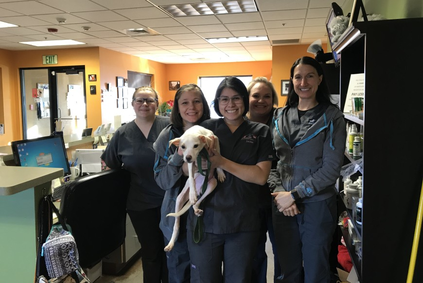 Marshmallow and staff at the Silver Creek Animal Clinic
