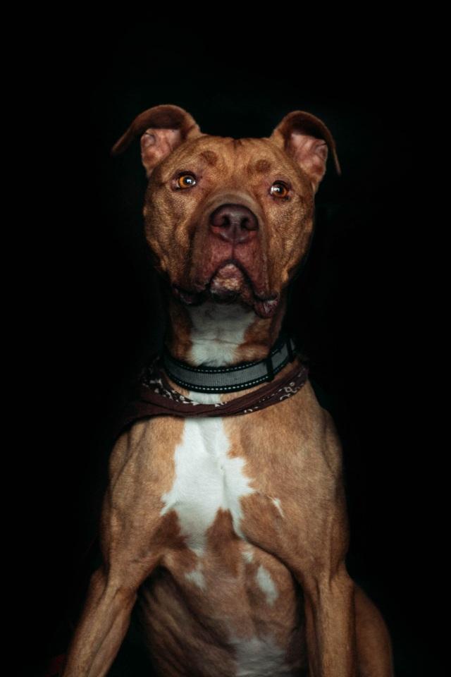 Adoptable Dog Boden