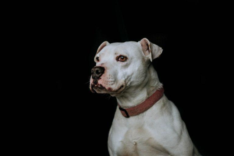 Adoptable Dog Cal