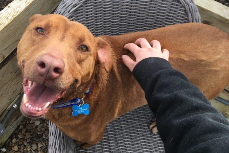 Adoptable Dog Francis