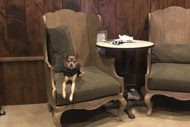 Adoptable Dog Garth