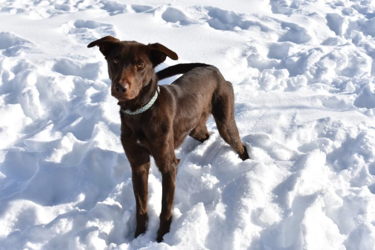 Adoptable Dog Pepper