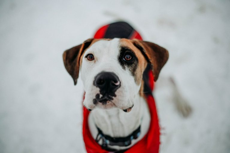 Adoptable Dog Max