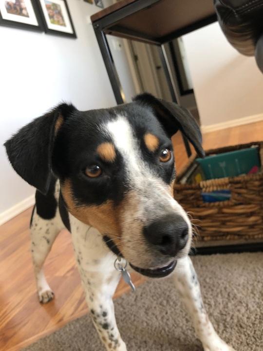 Adoptable Dog Gideon