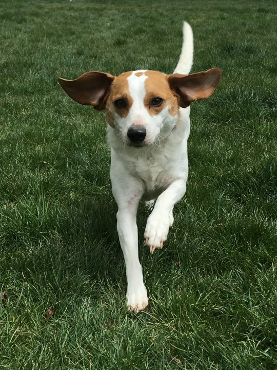 Adoptable Dog Dharma