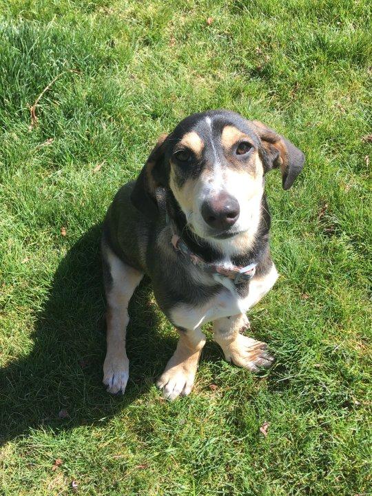 Adoptable Dog Mabel