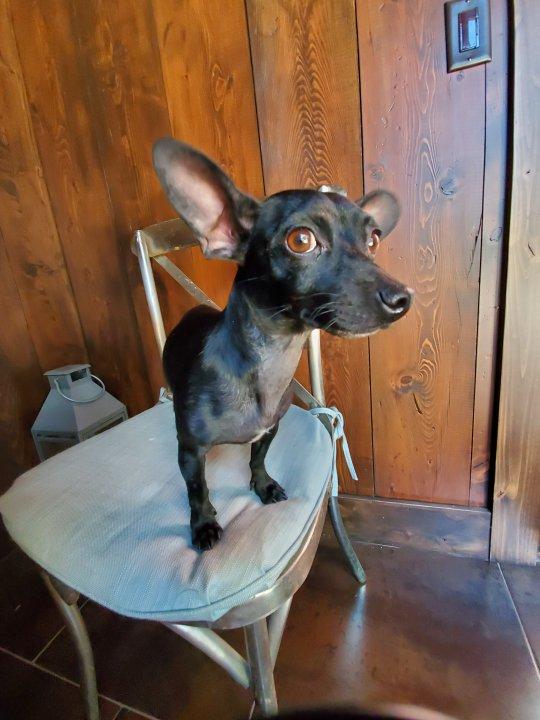 Adoptable Dog Vivian