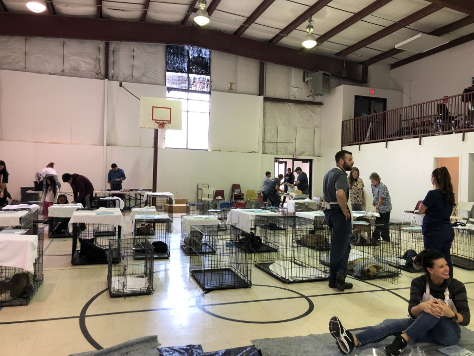 Goshute Reservation Spay / Neuter & Vaccination Clinic